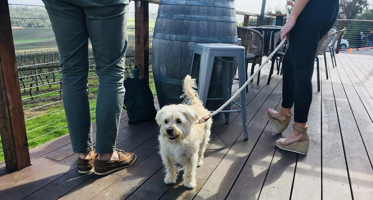 Pooches and Pinot tour of the Yarra Valley