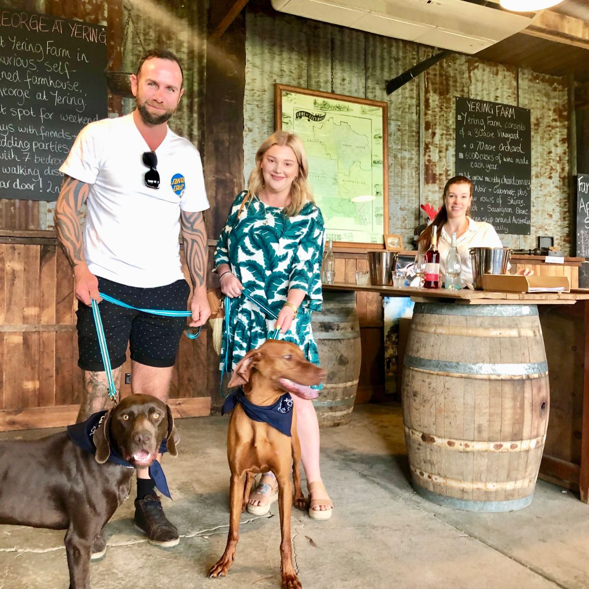 Vizsla and Pointer on Pooches & Pinot tour