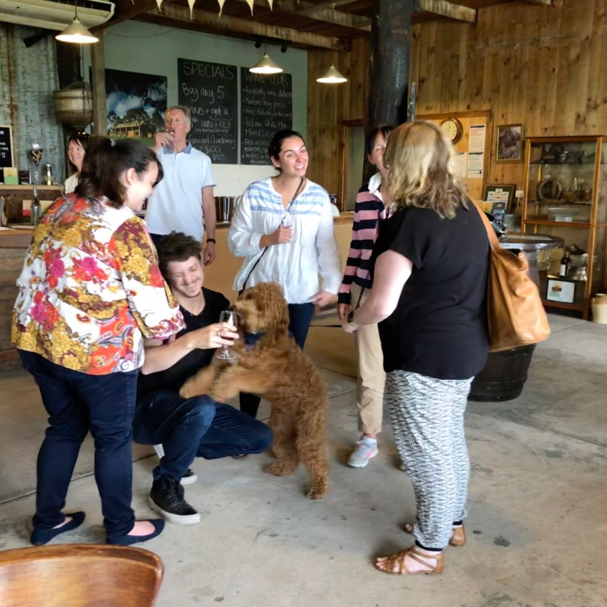 dog being adored on a Pooches and Pinot wine tour