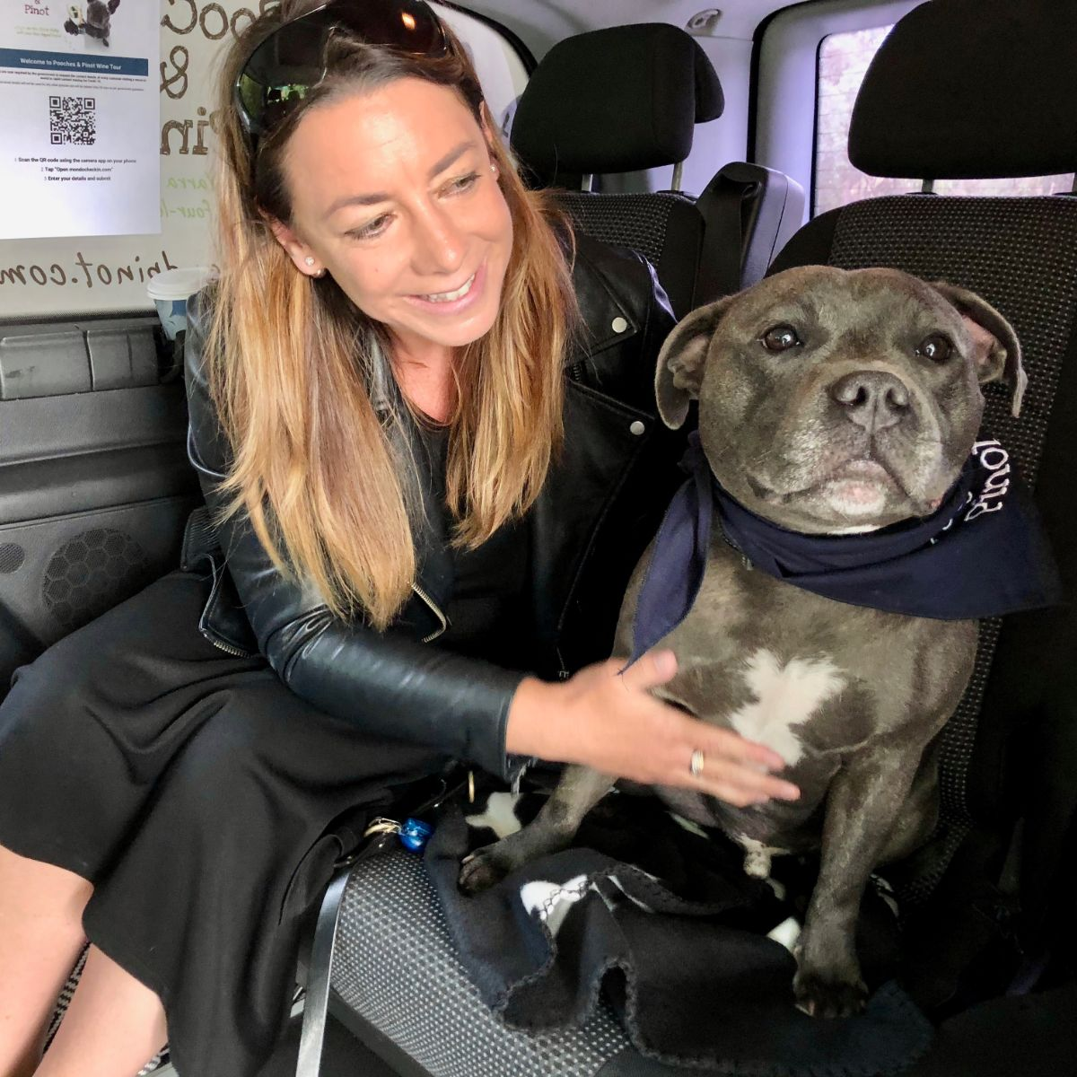 staffy in Pooches & Pinot wine tour van