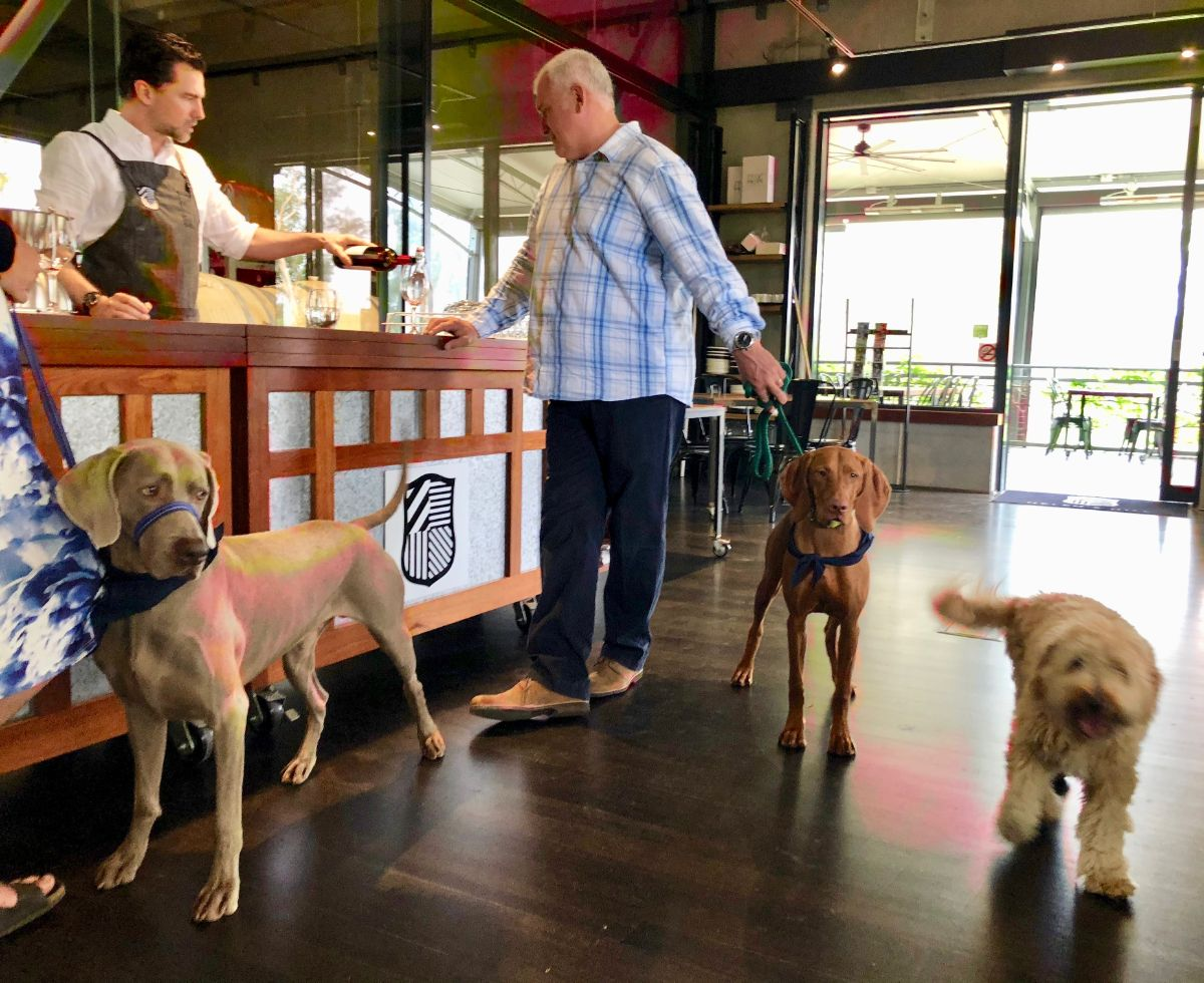 wine tasting on a pooches and pinot wine tour