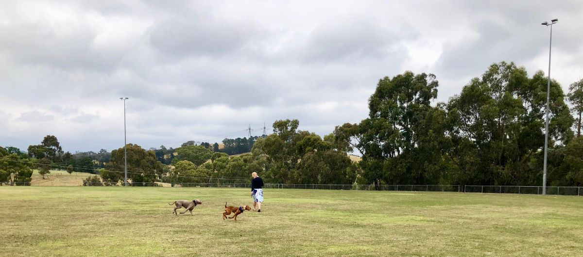off lead dog park on a Pooches and Pinot wine tour