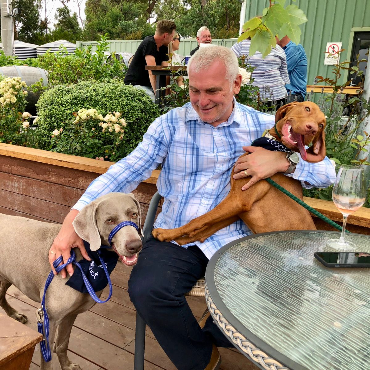 dog friendly wine tours yarra valley pooches and pinot