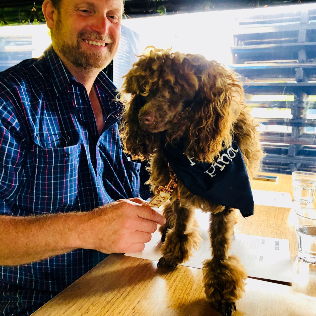 Poodle enjoying a private wine tour of the yarra valley with Pooches & Pinot