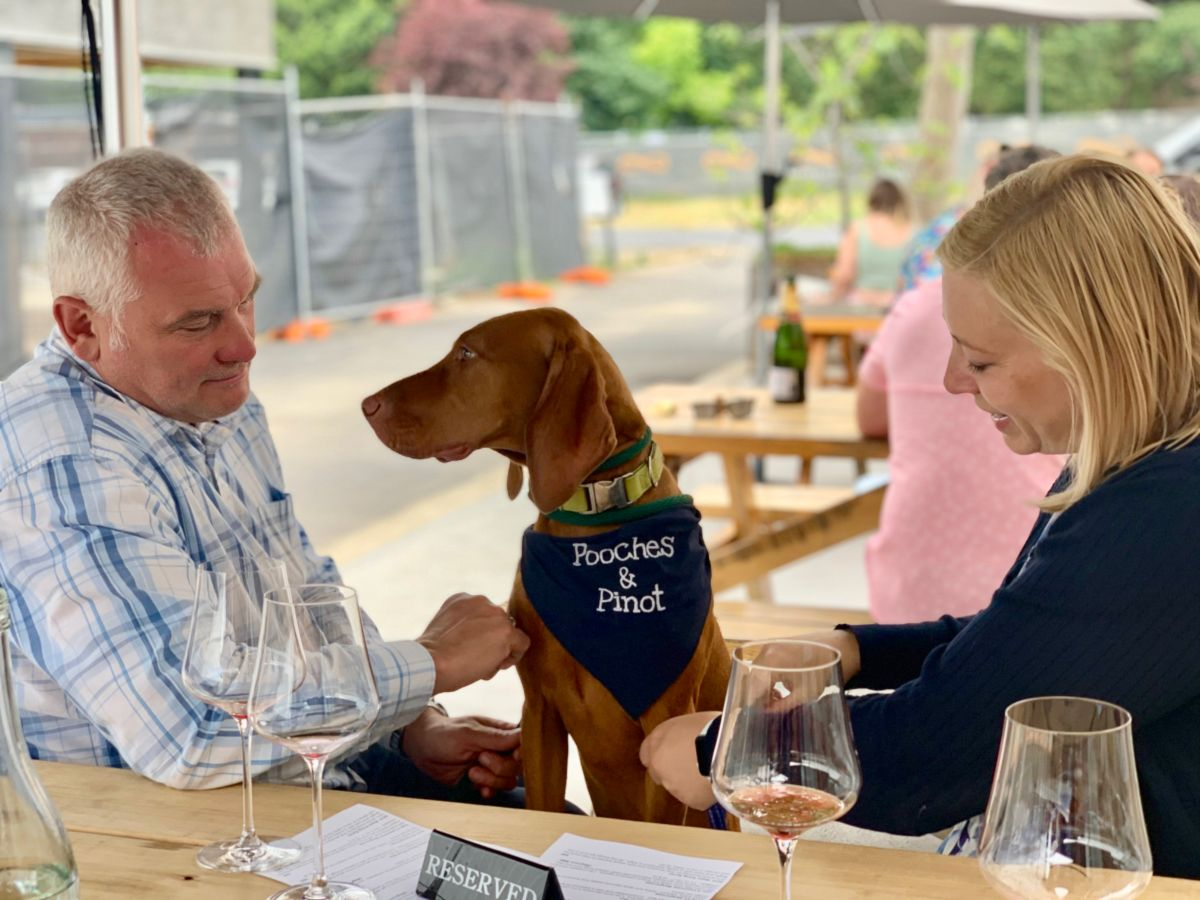 viszla on a pooches and pinot wine tour