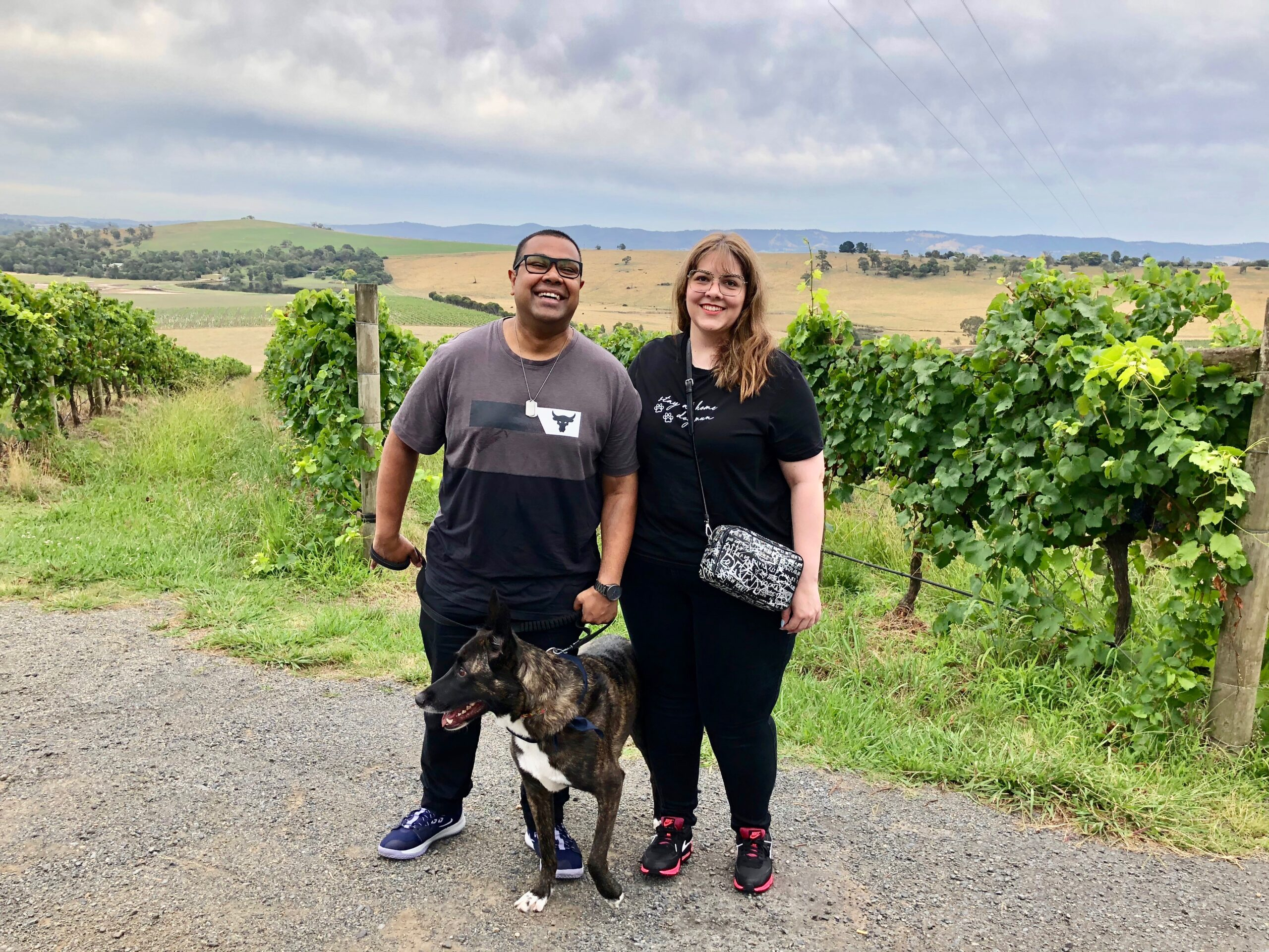 dog on a wine tour with pooches and pinot