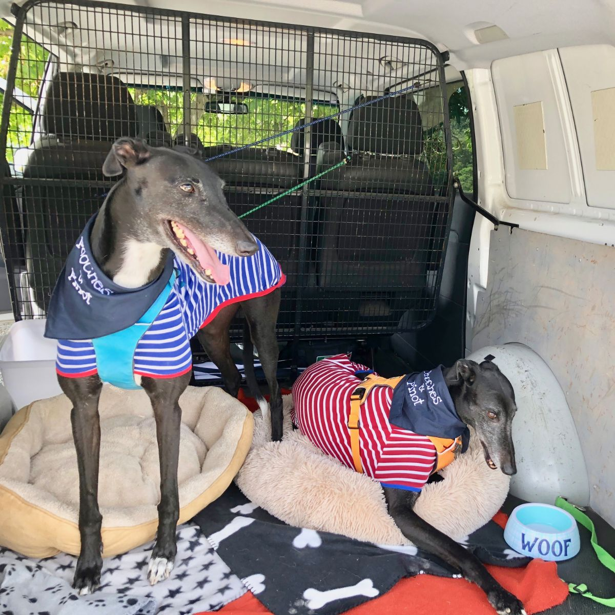 greyhound rescue dogs on wine tour with Pooches and Pinot