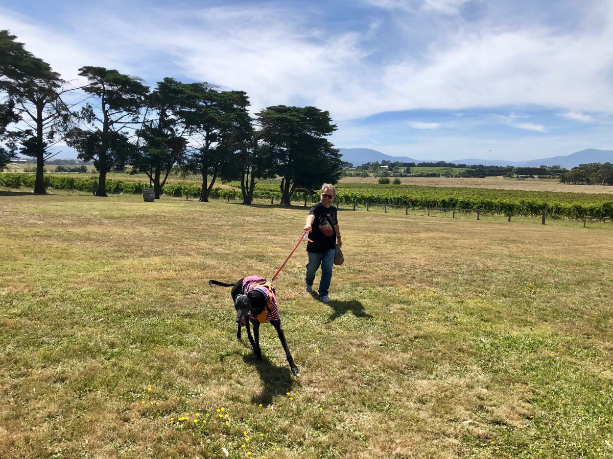 dog wine tour Pooches and Pinot