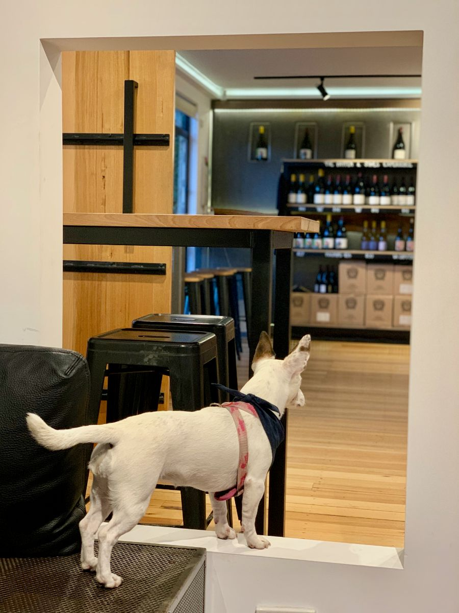 Pooches & Pinot dog friendly yarra valley winery tour